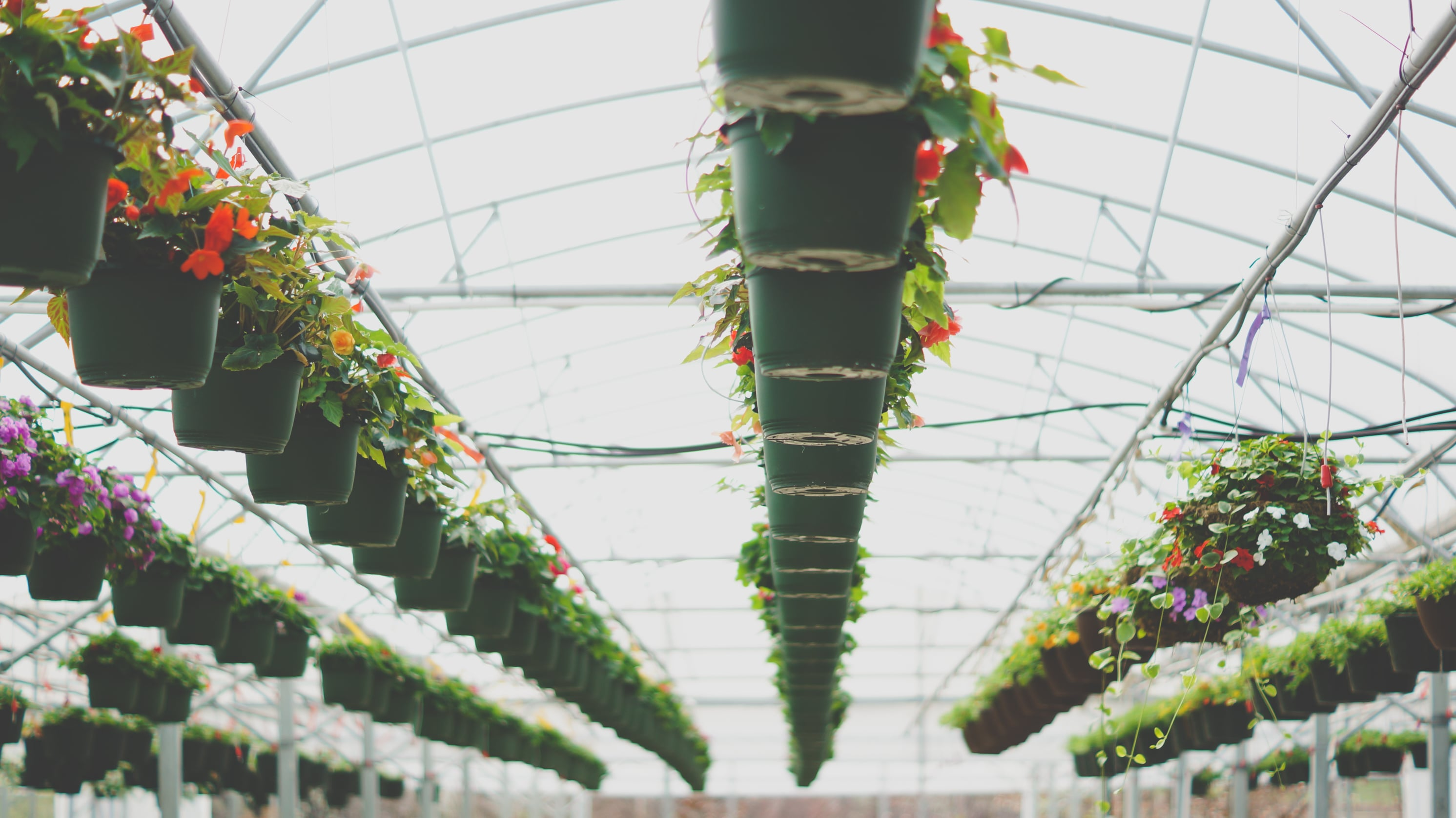 Heat It Up: Build Hotter Greenhouses