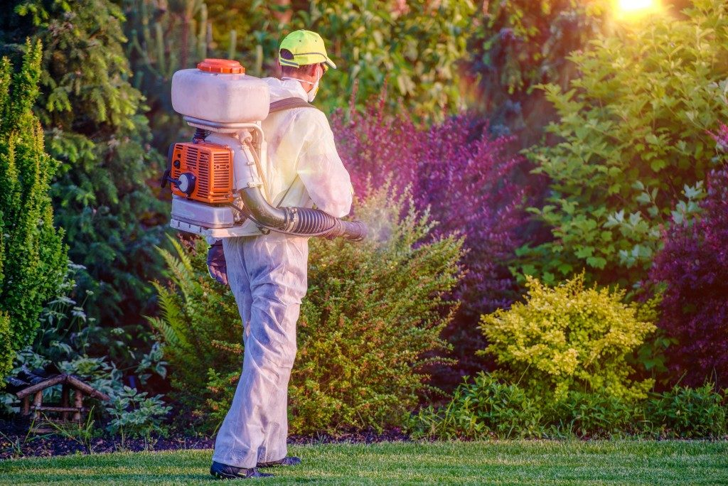 man spraying pesticide in garden